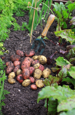 Fall Gardening: Vegetable Garden