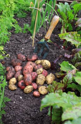 Fall Gardening: Vegetable Garden